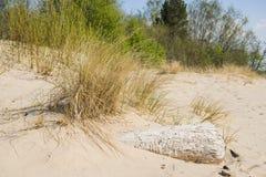 Driftwood log on sea coast. Sunny summer day. Latvia. River called Gauja stock image