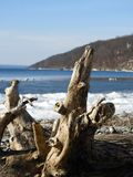 Driftwood log washed ashore on Cayuga. Driftwood log lay washed ashore on rocky ice covered shoreline of Cayuga Lake. Cold winter lake with snowy waves and royalty free stock photography