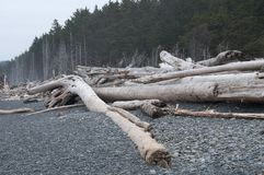 Driftwood logs on Beach with Evergreen Forest Stock Photos