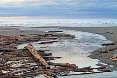 Driftwood Logs Covering a Beach Royalty Free Stock Photo