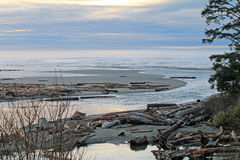 Driftwood Logs Covering a Beach Royalty Free Stock Photography