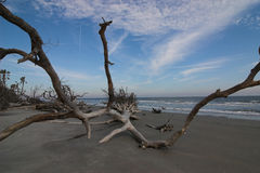 Driftwood lungo l'oceano Immagine Stock