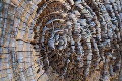 Driftwood macro. Macro photo of driftwood with cobwebs Stock Photography