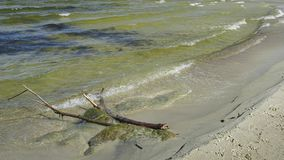 Driftwood in mild waves of Baltic sea on sandy beach on sunny spring day - slow. Close shot stock video footage