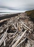 Driftwood na czarnym piasku, Nowa Zelandia Zdjęcia Royalty Free