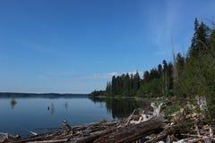 Driftwood na krawędzi Jeziornego Quinault Zdjęcia Stock