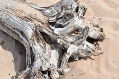 Driftwood na piaskowatej plaży obraz royalty free