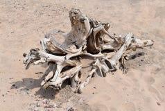 Driftwood na piaskowatej plaży zdjęcie royalty free