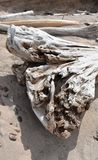 Driftwood na piaskowatej plaży obraz stock