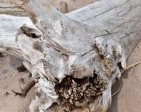 Driftwood na piaskowatej plaży zdjęcia royalty free