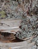 Driftwood na piaskowatej plaży obrazy royalty free