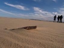 Driftwood na praia Imagens de Stock