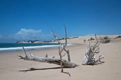 Driftwood na praia tropical Imagens de Stock Royalty Free