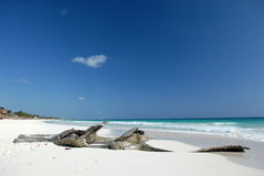 Driftwood na praia tropical Imagem de Stock Royalty Free
