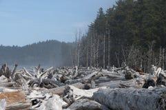Driftwood na seashore przy kantor plażą Olimpijski park narodowy, WA obraz stock