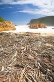 Driftwood nas cabeças Imagens de Stock Royalty Free