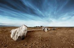 Driftwood nella sabbia Fotografie Stock Libere da Diritti