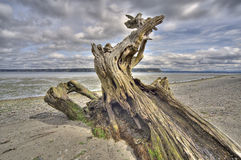 Driftwood no console de Whidbey, Washington Imagens de Stock Royalty Free