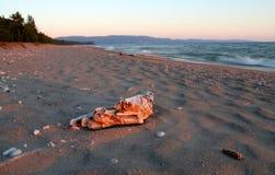 Driftwood no superior de lago Imagens de Stock Royalty Free