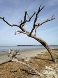 Driftwood by the ocean Royalty Free Stock Images