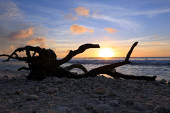 Driftwood on the ocean sunset background Royalty Free Stock Photo