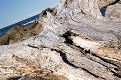 Driftwood. On rocks with surf behind Stock Photography