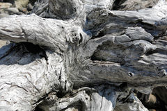 Driftwood. Old chunky driftwood at beach Royalty Free Stock Image