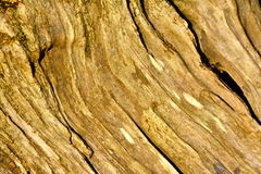 DRIFTWOOD. OLD WEATHERED WOOD WITH UNUSUAL PATTERN Royalty Free Stock Image