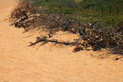 DRIFTWOOD AND ORGANIC DEBRIS AT THE EDGE OF THE BEACH. Image of a dead branches the edge of a sandy beach at the sea in summer royalty free stock photos