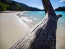 Driftwood over Trunk Bay, St. John, Virgin Islands royalty free stock images