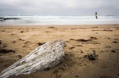 Driftwood på en bränningstrand royaltyfri fotografi