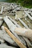 Driftwood på kust royaltyfria foton
