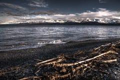 Driftwood på land slut arkivfoto