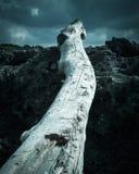 Driftwood på strand Arkivfoto