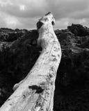 Driftwood på strand Arkivbilder