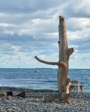 Driftwood på stranden royaltyfria bilder