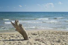 Driftwood på stranden Arkivfoton