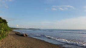 Driftwood på stranden arkivbilder