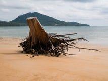 Driftwood på stranden På Nai Yang Beach Near Phuket Internatio arkivfoto