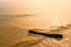 Driftwood på stranden thailand arkivbilder