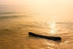 Driftwood på stranden thailand arkivbild