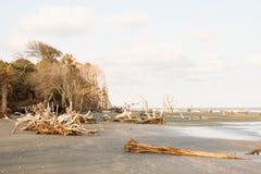 Driftwood på tom strand på solnedgången royaltyfria bilder