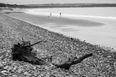Driftwood on pebbled ballybunion beach Stock Photo