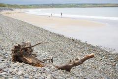 Driftwood on pebbled beach Stock Photos