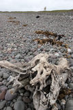 Driftwood on the pebbled beach Stock Photos
