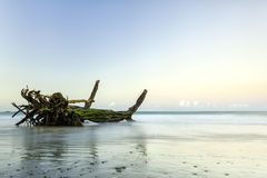 Driftwood Royalty Free Stock Photography