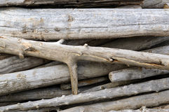 Driftwood pile Royalty Free Stock Images