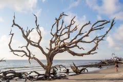 Driftwood plaża, Jekyll wyspa Gruzja Zdjęcia Stock