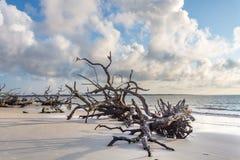 Driftwood plaża, Jekyll wyspa Gruzja Obraz Stock