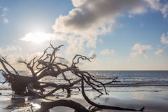 Driftwood plaża, Jekyll wyspa Gruzja Obrazy Royalty Free